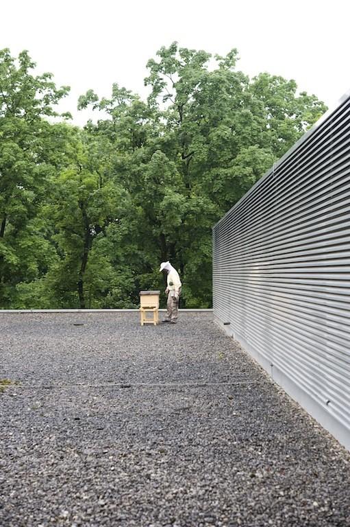 Kammerbienen auf dem haus der architektur - Haus der architektur ...