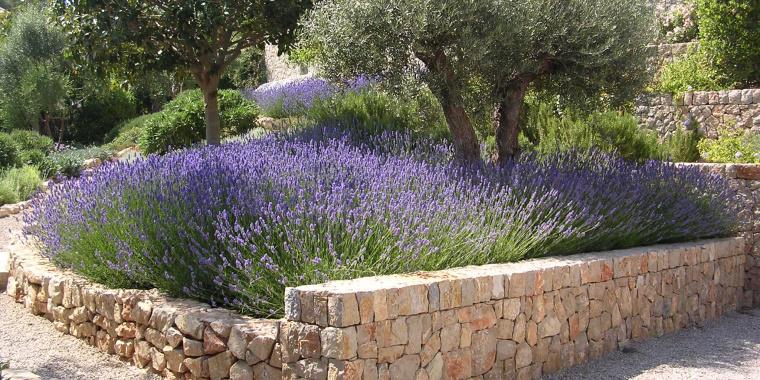 Mediterraner garten muenchenarchitektur for Gartengestaltung mediterran