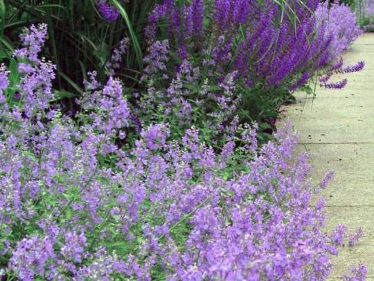 BILD:       Blütengarten in Englschalking