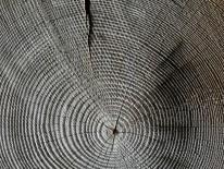 BILD:   Deutscher Holzbaupreis