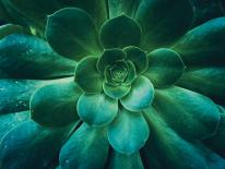 BILD:   Grünes Design im Fokus
