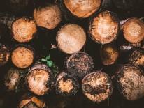 BILD:   Holzbau als soziale Verpflichtung